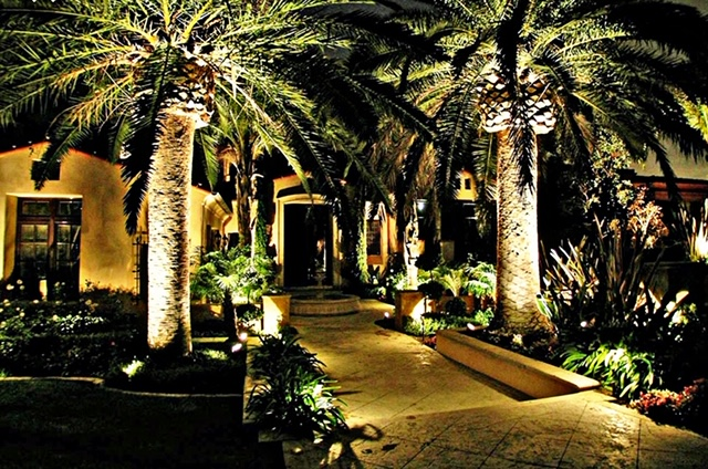 Outdoor residential lighting highlighting palm trees and walkway at night
