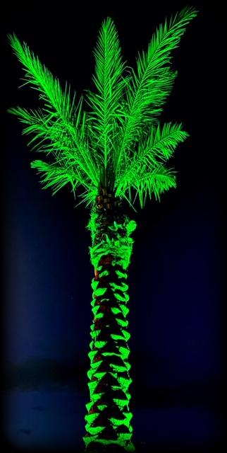 Green-lit palm tree landscape lighting design